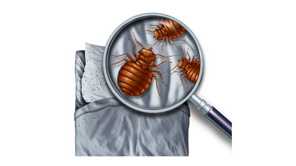 Can Bed Bugs Live in Different Types of Mattresses
