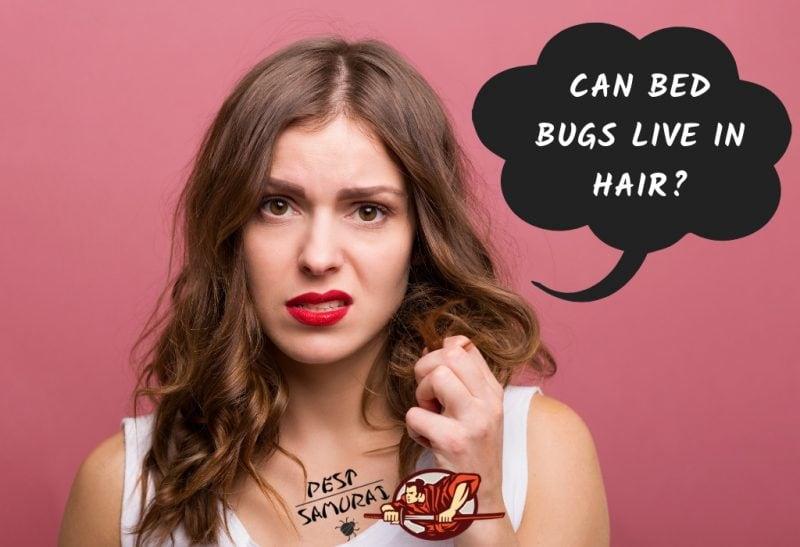 Bed Bugs In Hair Can Bed Bugs Live In Your Hair