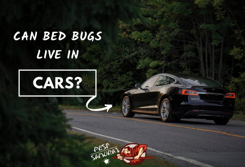 Bed Bugs and Cars Can Bed Bugs Live in Cars