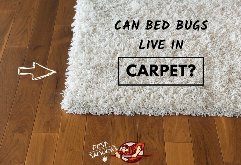 Bed Bugs in Carpet Can Bed Bugs Live in Carpet