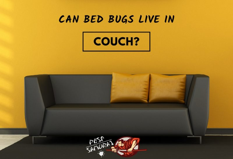 Bed Bugs in Couch Can Bed Bugs Live in Couch.