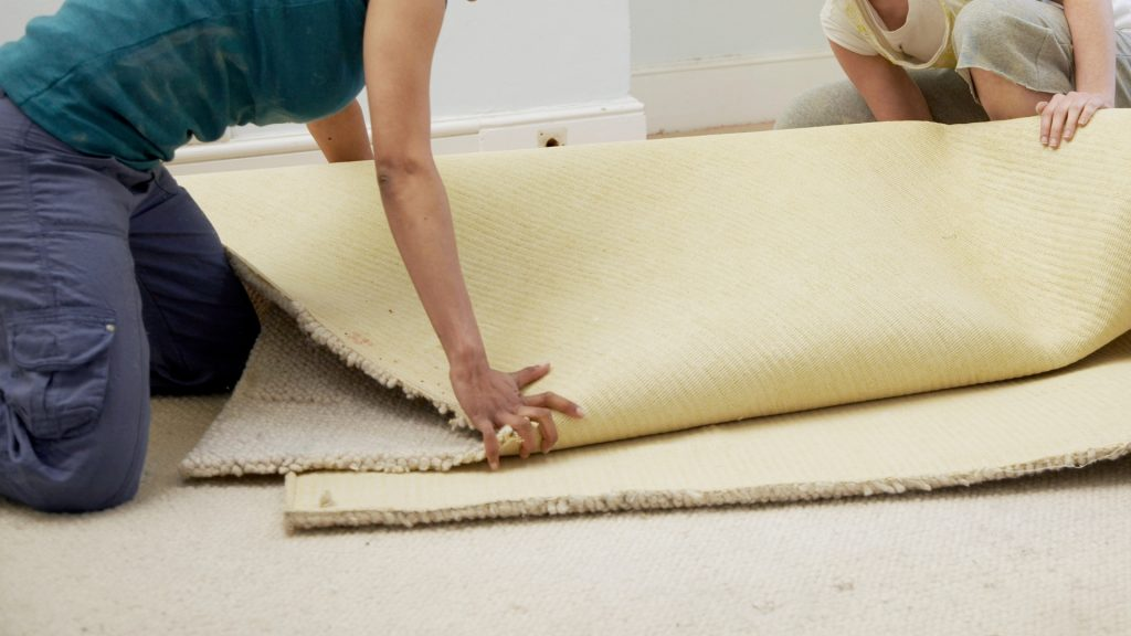 Can Bed Bugs Live Under Carpet