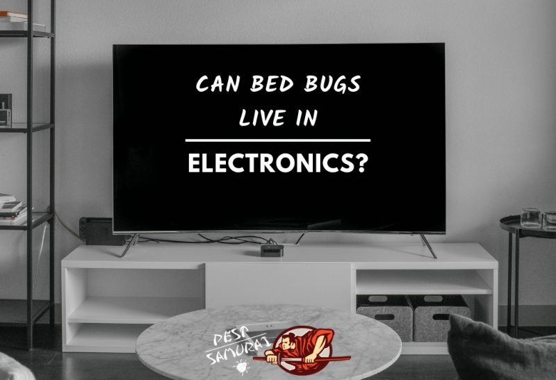 Can Bed Bugs Live in Electronics