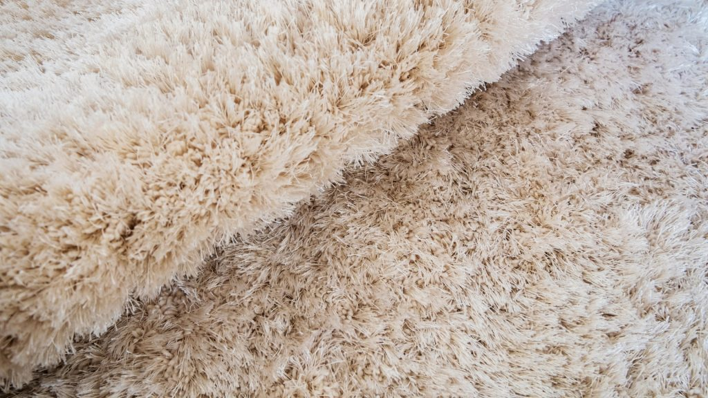 How Did Bed Bugs Get in Your Carpet