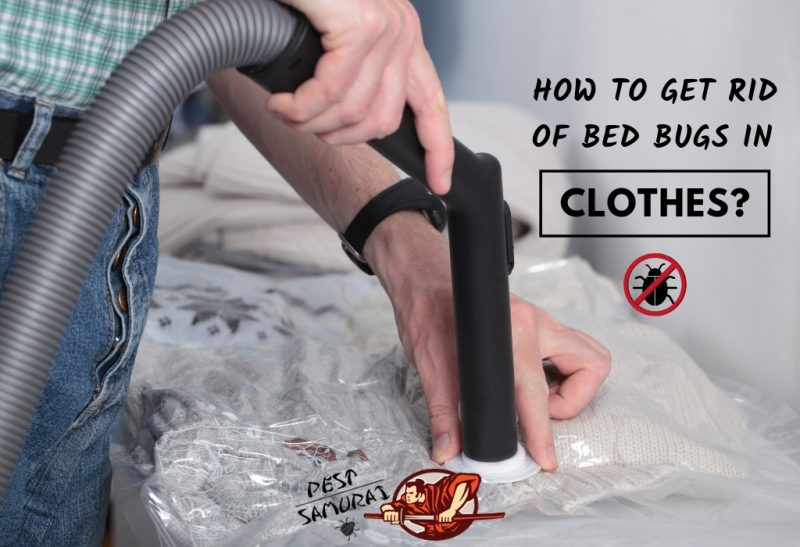 How to Get Rid of Bed Bugs in Clothes - Easy Instructions