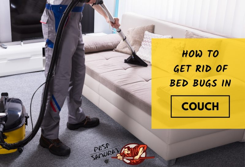 How to Get Rid of Bed Bugs in Couch - Easy Instructions