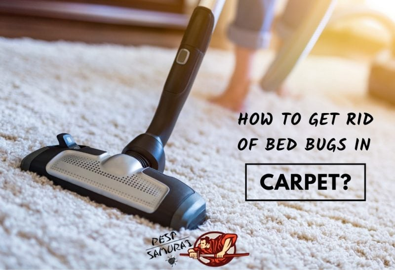 How to Get Rid of Bed Bugs in a Carpet - Easy Instructions