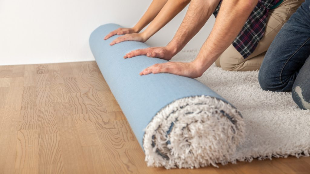 Why Have Bed Bugs Infested Your Carpet.