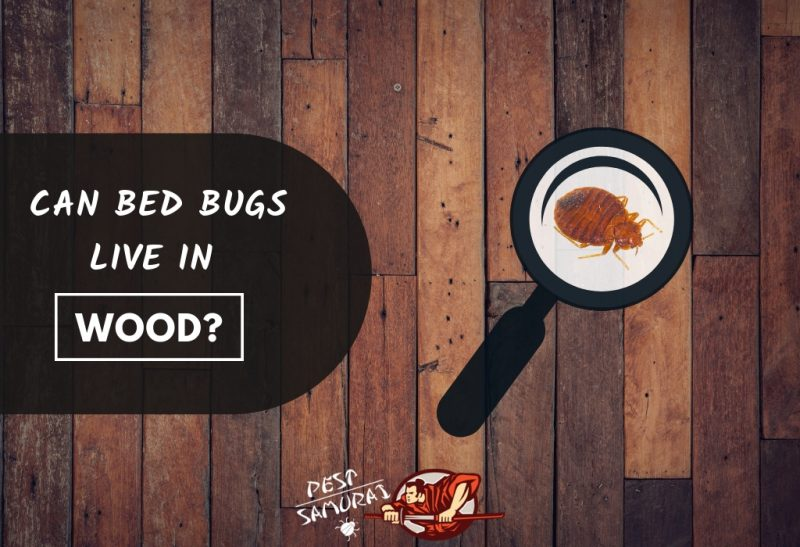 Bed Bugs in Wood Can Bed Bugs Live in Wood