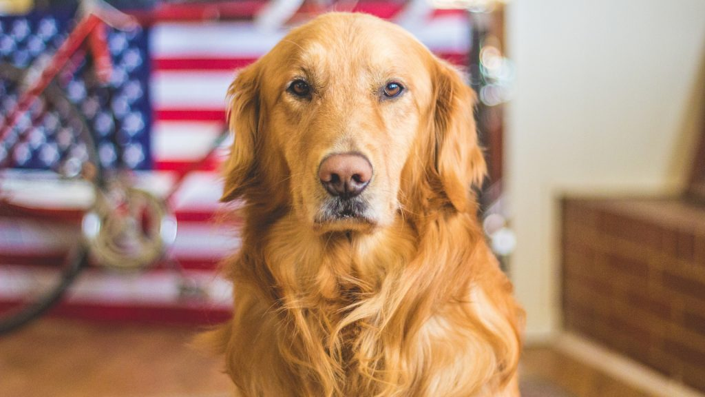 Can Dog Detect Bed Bugs Are They Able to SmellSniff Them
