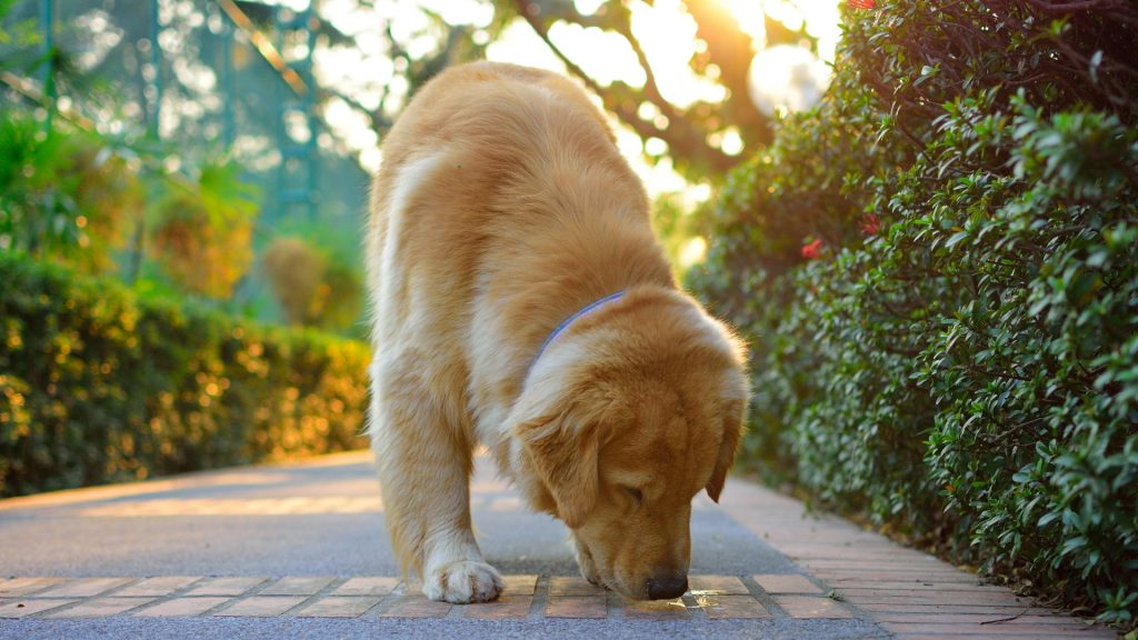 Can a Dog Carry Bed Bugs from One House to Another