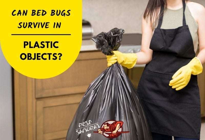 Bed Bugs And Plastic Can Bed Bugs Survive In Plastic Objects Pest Samurai