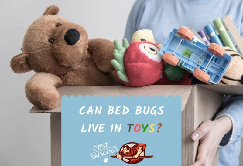 Bed Bugs and Toys Can Bed Bugs Live in Toys