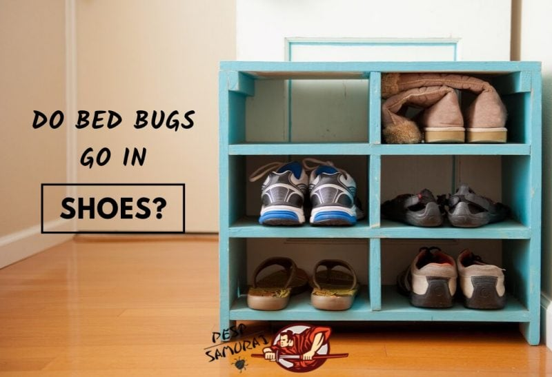 Bed Bugs in Shoes Do Bed Bugs Go in Shoes