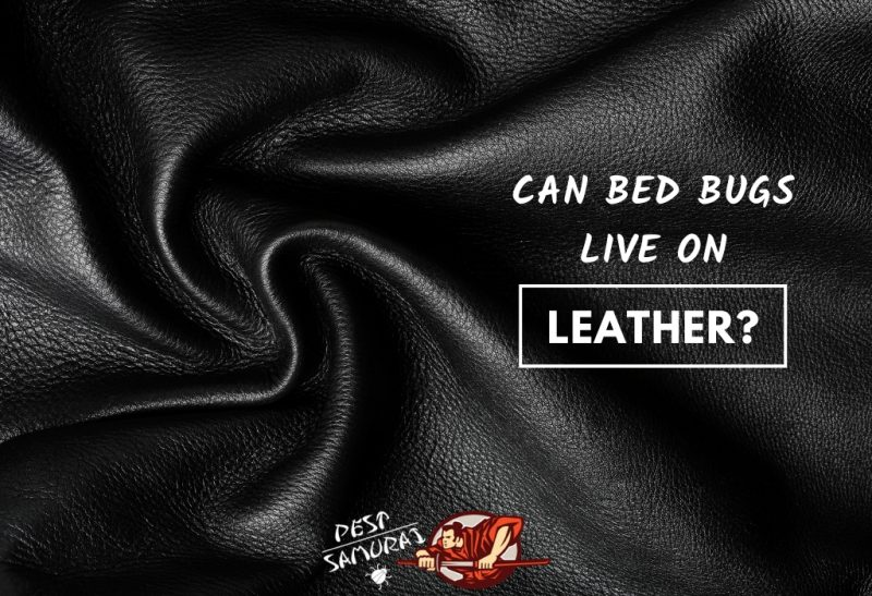 Can Bed Bugs Live on Leather