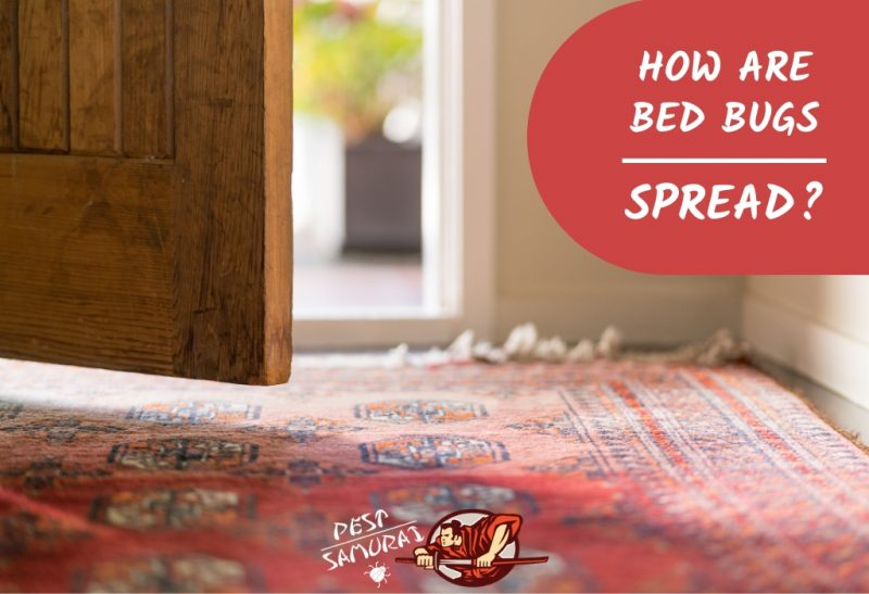 How Are Bed Bugs Spread