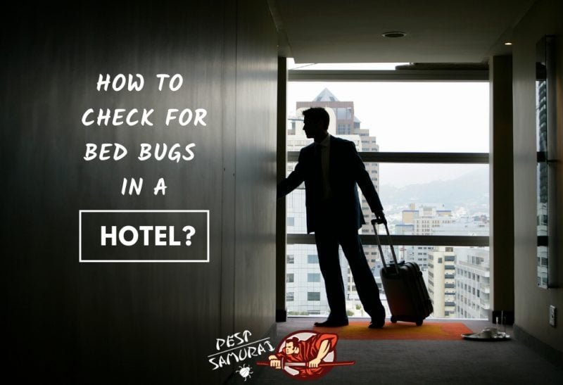 Bed Bugs in Hotel How to Check for Bed Bugs in a Hotel