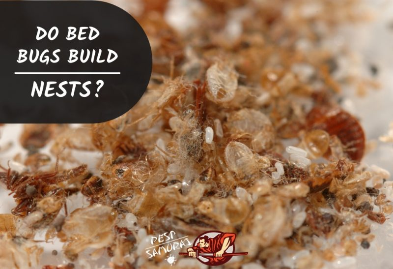 Do Bed Bugs Build Nests