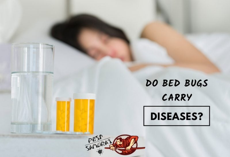 Do Bed Bugs Carry Diseases