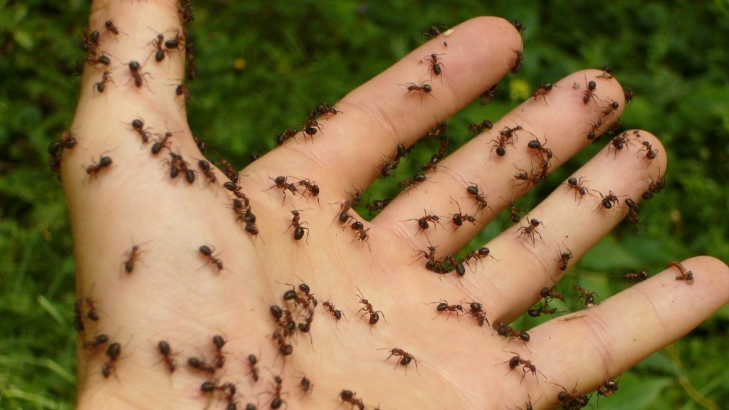 Ant Bites and Stings - Everything You Need to Know