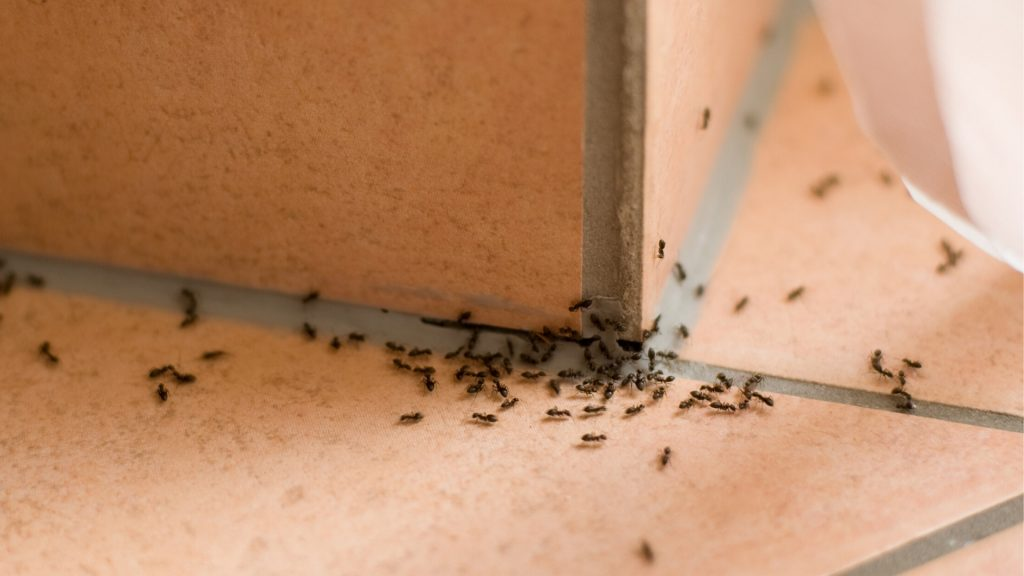 Ants – Replace One Small Pest With The Other.