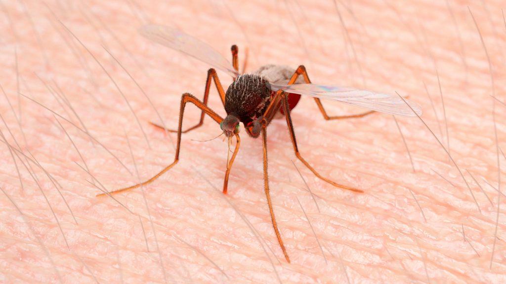 Bed Bug Bites vs Mosquito Bites