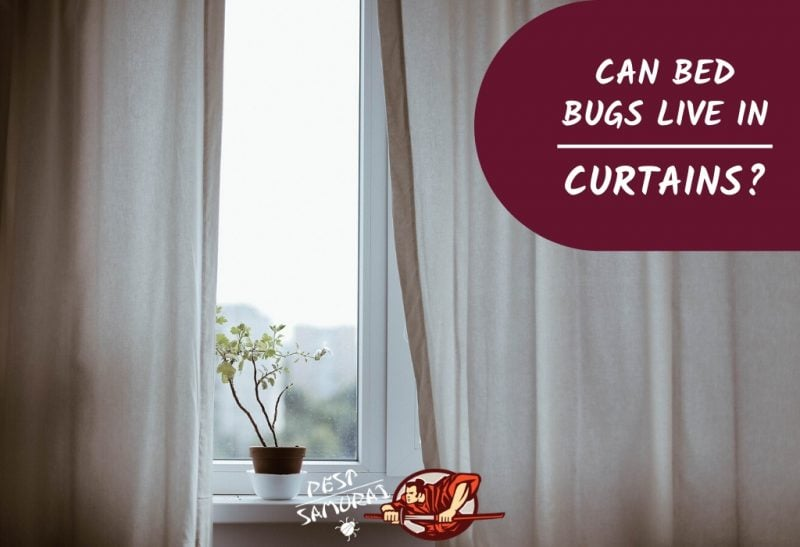 Bed Bugs in Curtains Can Bed Bugs Live in Curtains