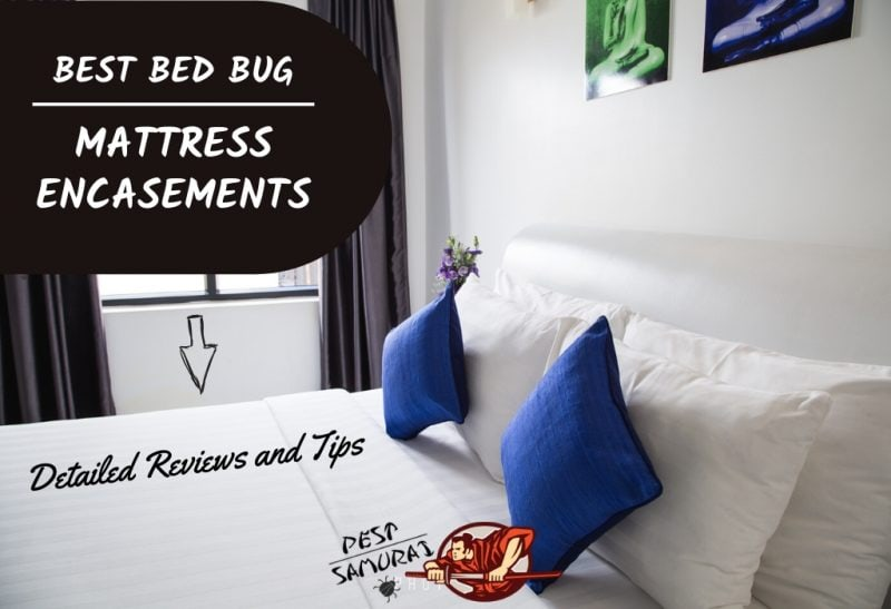 Best Bed Bug Mattress Encasements in 2020 – Detailed Reviews and Tips