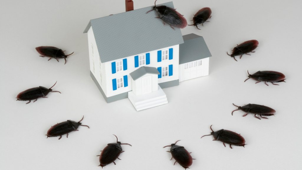 Cockroach vs Bed Bugs
