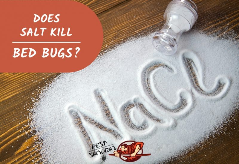 Does Salt Kill Bed Bugs