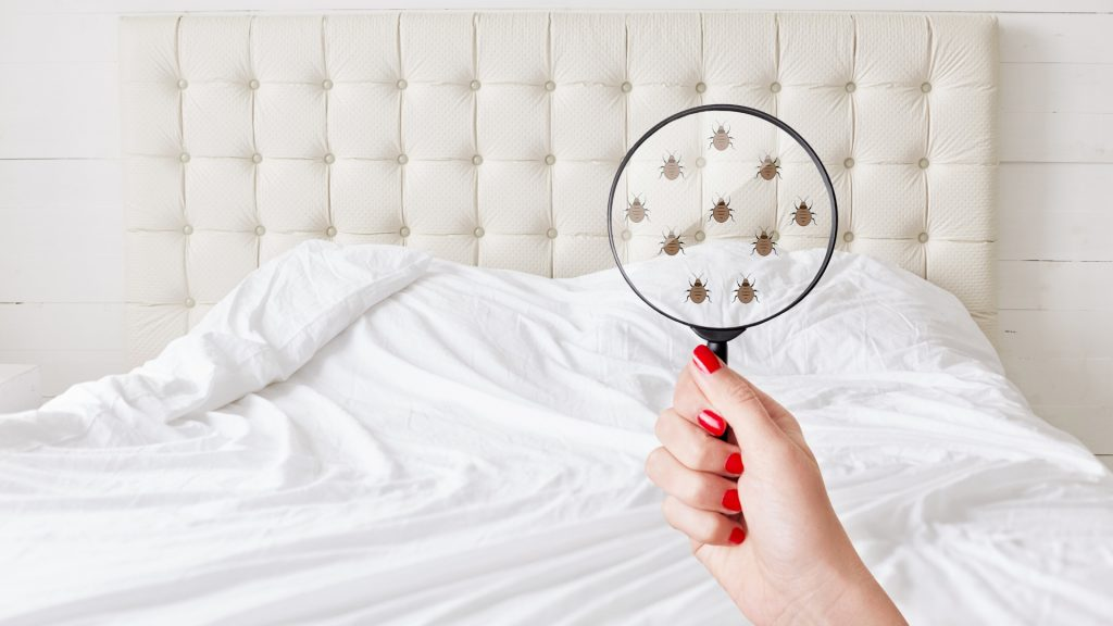 Explore Bed Bug Hideouts and Find Them