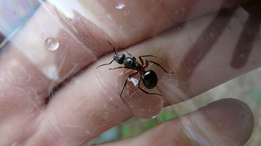 General Characteristics of Ants