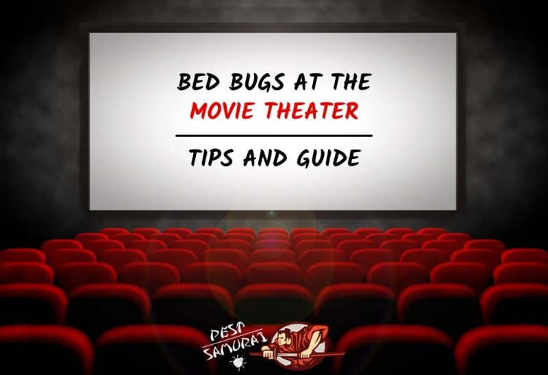 How to Avoid Bed Bugs at the Movie Theater Tips and Guide