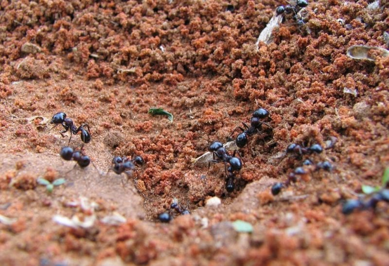 How to Find Carpenter Ant Nest – Tips & Guide
