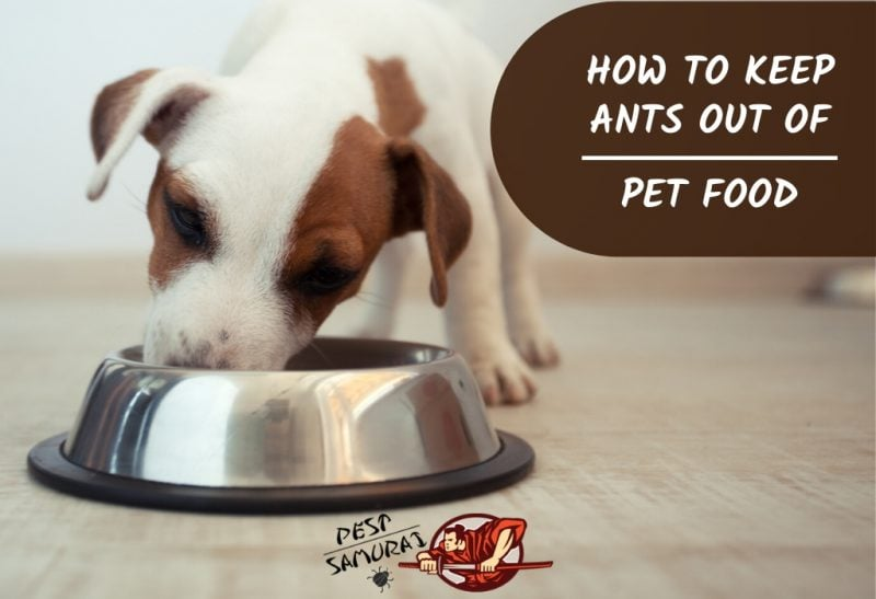 How to Keep Ants Out of Pet Food - Complete Guide