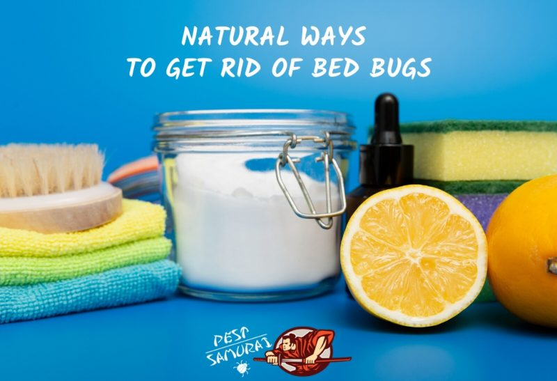 Natural Ways to Get Rid of Bed Bugs