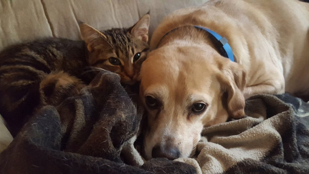 Pets – What About Our Domesticated Friends