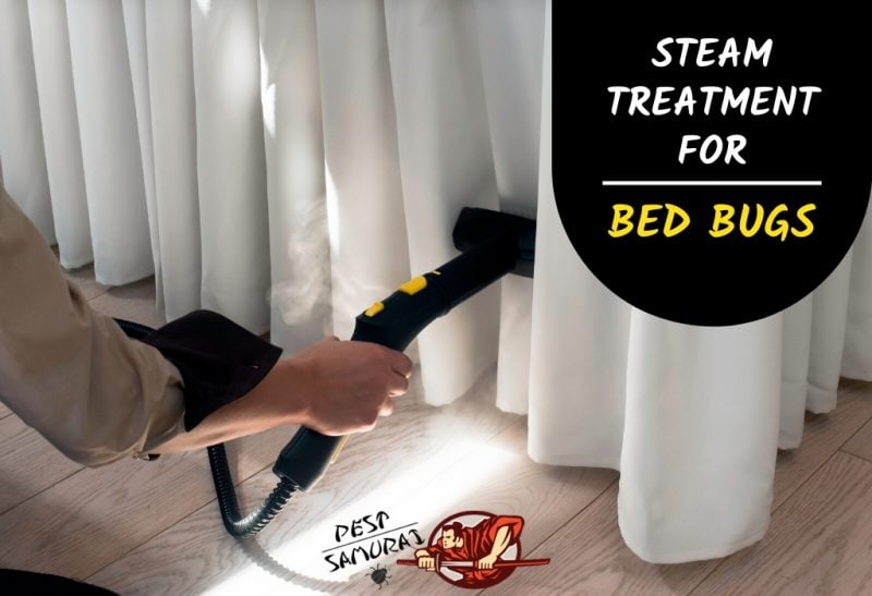 Steam Treatment for Bed Bugs