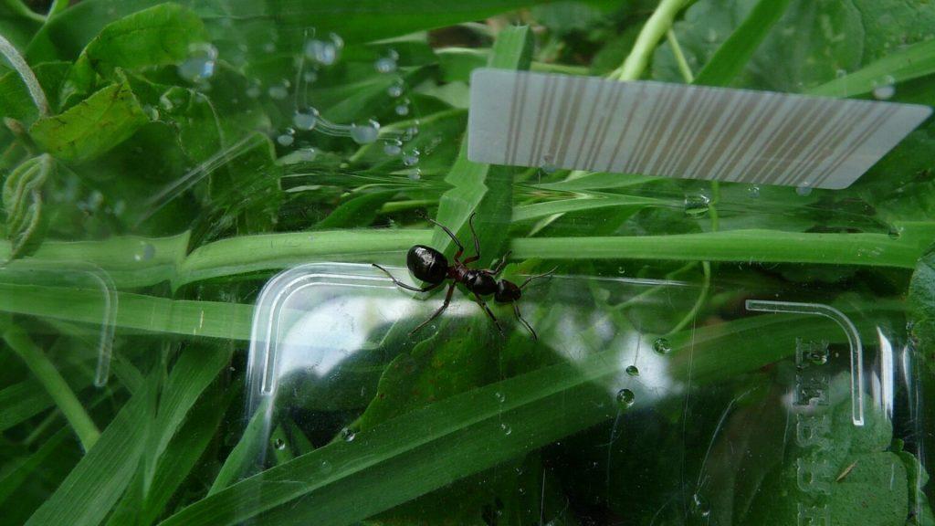 What Do Queen Ants Eat