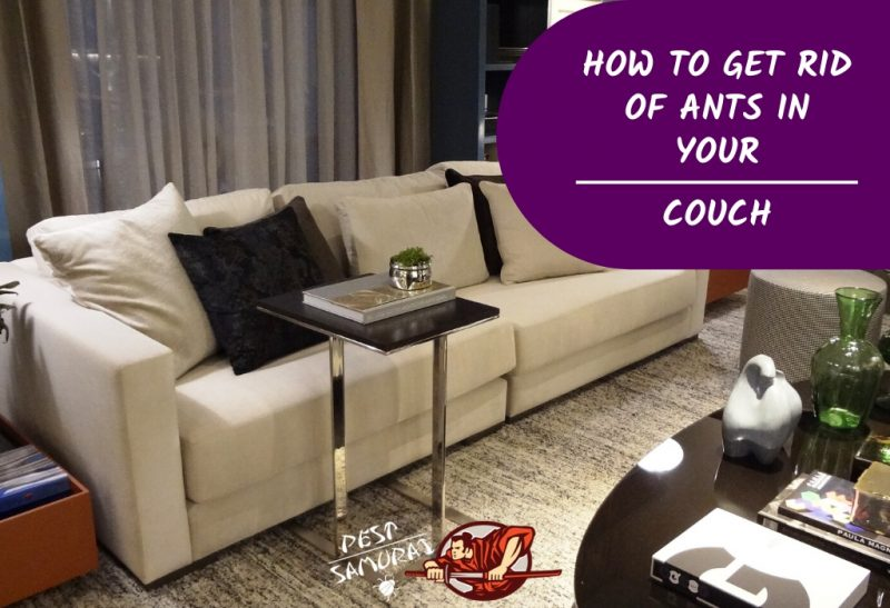 Ants in Couch How to Get Rid of Ants in Your Couch