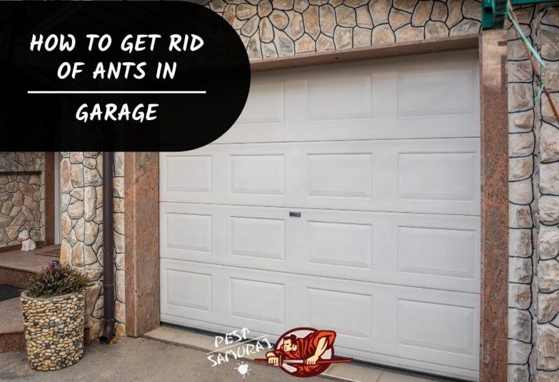 Ants in My Garage How to Get Rid of Ants in Garage