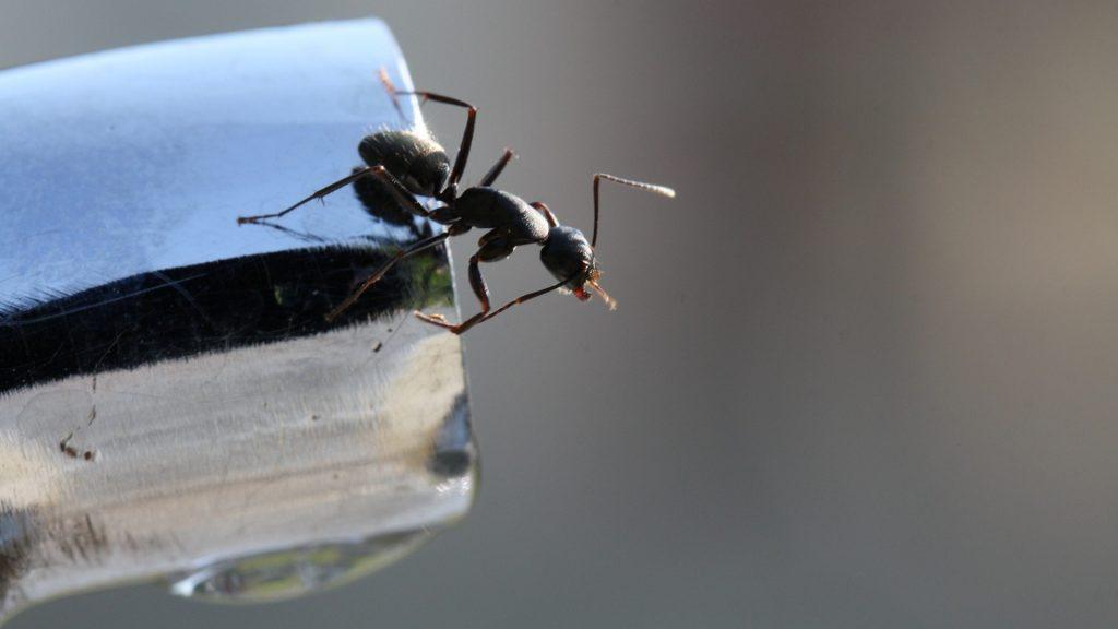 Effective Ways to Get Rid of Ants in Bathroom Drain