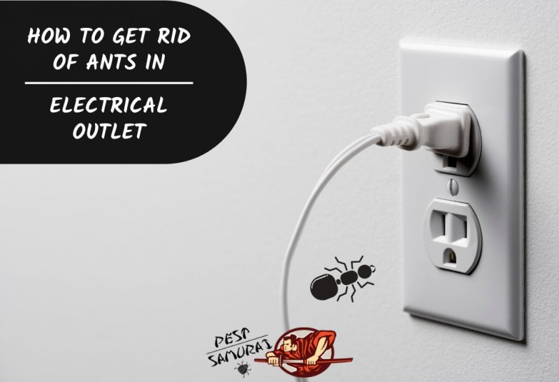 How To Get Rid Of Ants In Electrical Outlet A Complete Guide