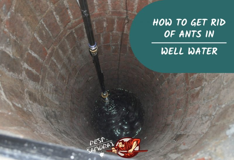 How To Get Rid Of Ants In Well Water