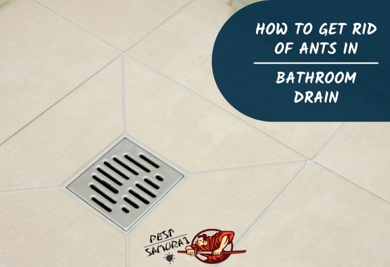 How to Get Rid of Ants in Bathroom Drain