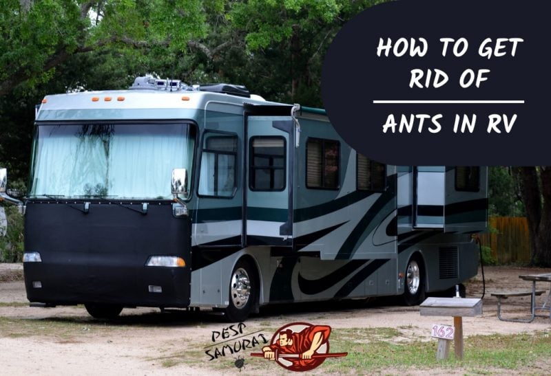 How to Get Rid of Ants in RV A Complete Guide