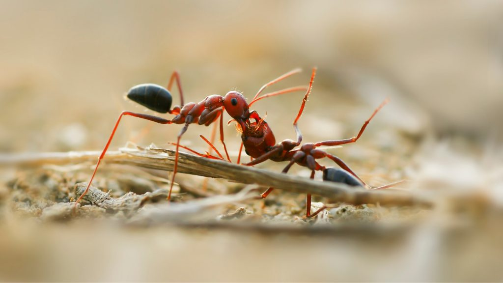 List of Chemicals for Ant Control