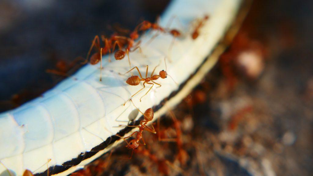 Outside Ant Pheromone Trails Prevention