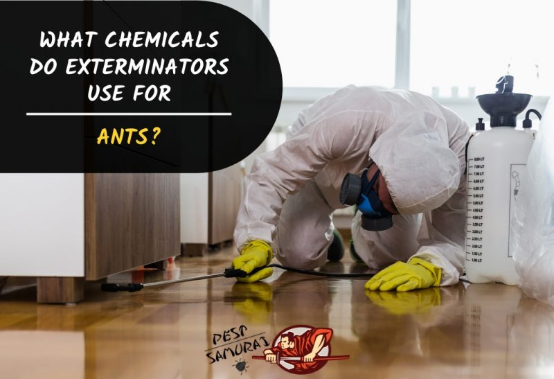 What Chemicals do Exterminators Use for Ants.