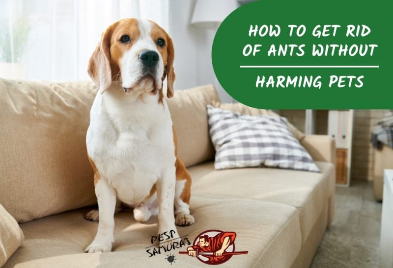 How to Get Rid of Ants Naturally Without